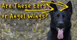 How Angel Paws Rescued Me From Danger