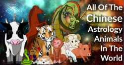 What Are The 12 Chinese Astrology Animals In The Zodiac?