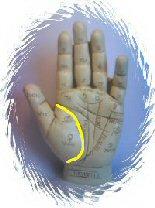 Palmistry Life Line