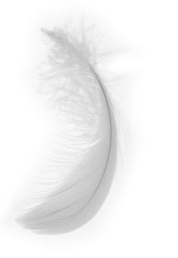 horoscope junkie feather